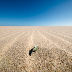 Seedling breaking through the sand dunes of Goukamma Marine Protected Area in South Africa