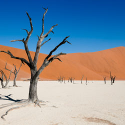 Petrified Trees of Deadvlei