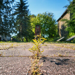 Break through Küstrin-Kietz