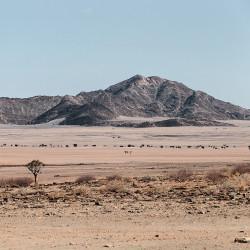 Namib-Naukluft,Berg,Bäume