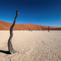 Dead Vlei,Namibia,desert,dead tree