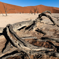 Dead Vlei,Namibia,Wüste,Toter Baum