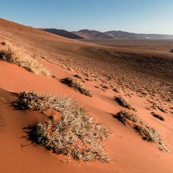giant sand dunes,namib desert