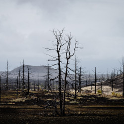 Dead Forest at Tolbachik