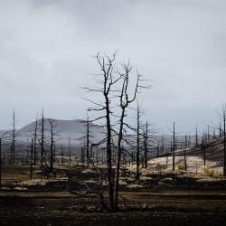 Toter Wald am Tolbatschik